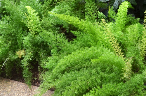 para plantas dispostos verticalmente ao longo de 4 pavimentos