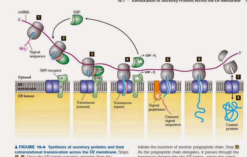 Protein Kasar