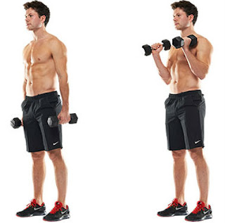 hammer curl exercise for biceps