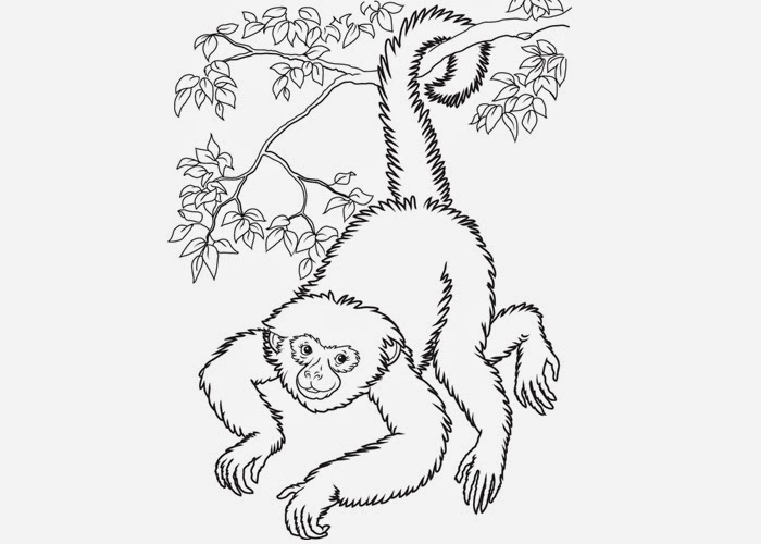 Howler Monkey Coloring Pages Coloring Page