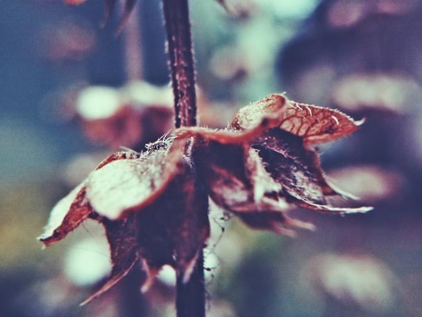 Inverno, folhas, detalhes, macro