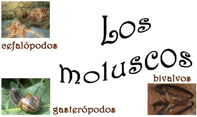 http://ceiploreto.es/sugerencias/cplosangeles.juntaextremadura.net/web/curso_3/naturales_3/moluscos/moluscos.html