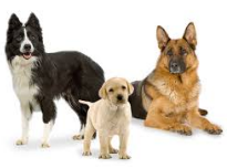 About The Right Dosage of Supplements For Your Pets