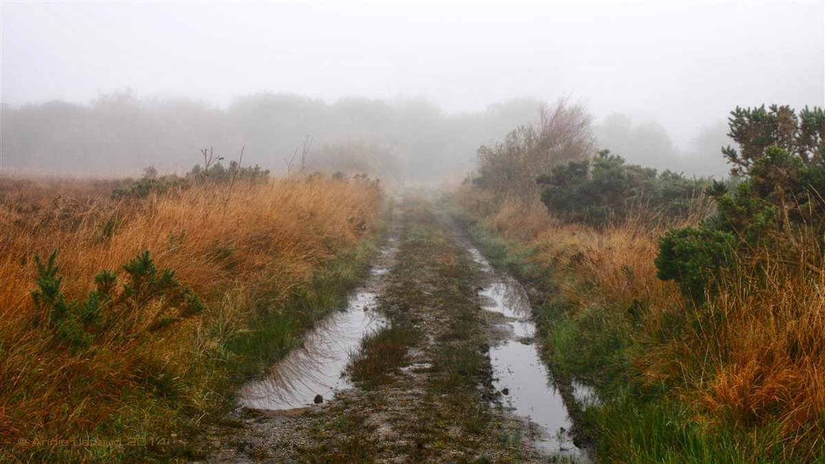 rusty colours in the grass, wet road with puddles, fog at the back