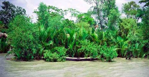 The-biggest-Sundarban