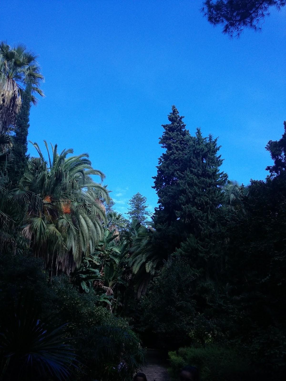 Ceip alegr a de la huerta m laga visita al jard n for Ceip jardin botanico