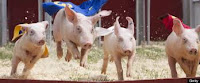 kansas pig races wichita scuba diving