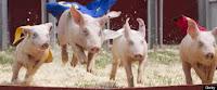 kansas pig races wichita scuba diving