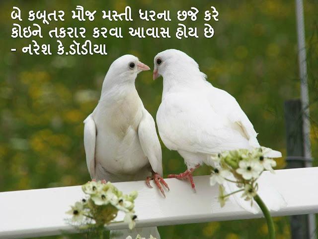 बे कबूतर मौज मस्ती धरना छजे करे Gujarati Sher By Naresh K. Dodia