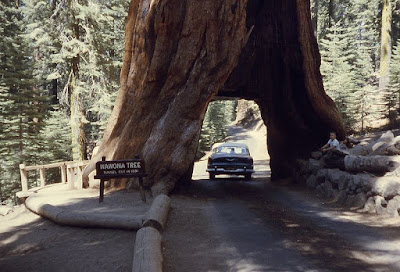 8 Facts About World Biggest Tree Giant Sequoia