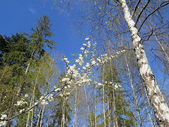 Kwitnące gałązki drzew
