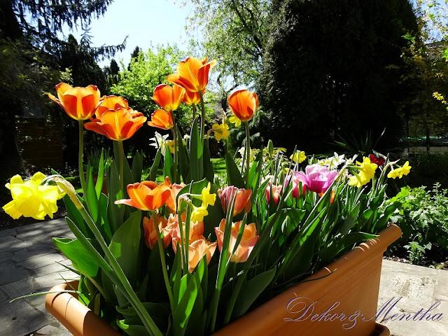 Dekor&Mentha Shop Tulipán Virághagyma Kollekciói
