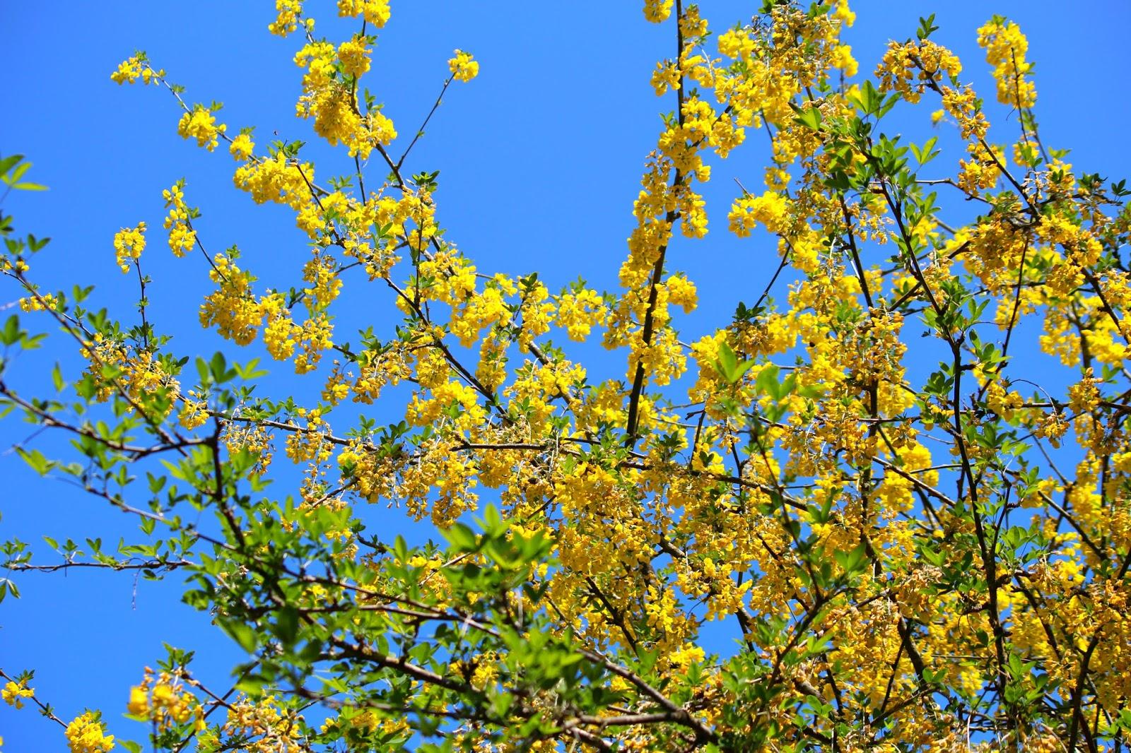 flowers blogger UK Photography summer