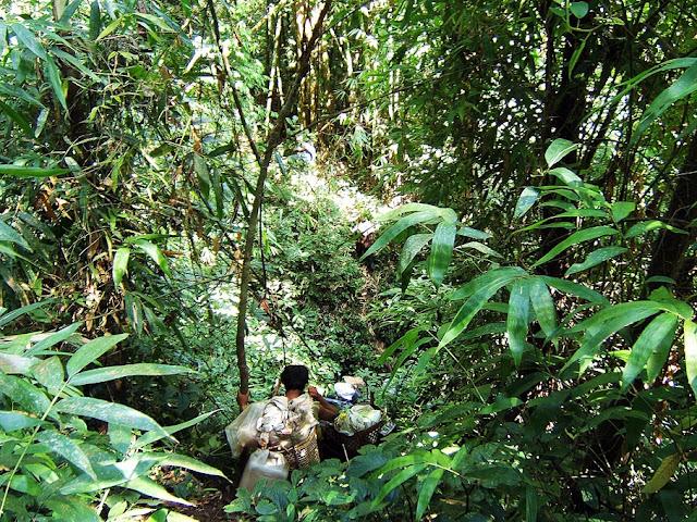 tropical flora at Alaungdaw Kathapa National Park