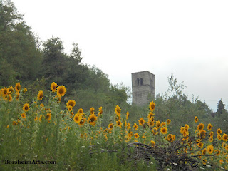 Sunflowers grown beneath the local church tower Valleriana Italy