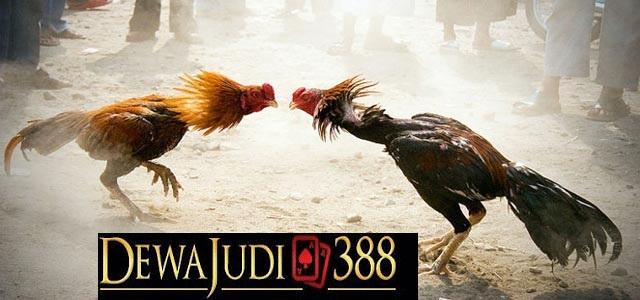 Dewajudi388 Agen Judi Online Terpercaya Di Indonesia