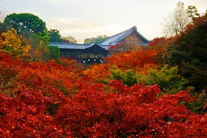 ใบไม้เปลี่ยนสีที่วัดโทฟุคุจิ @ www.tofukuji.jp