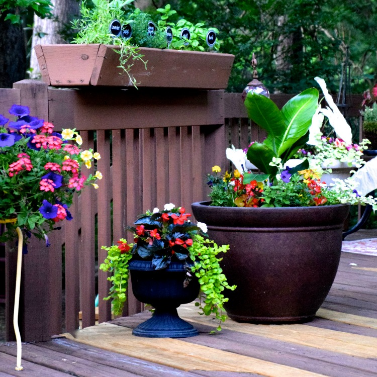 Summer container gardens on my back deck | Ms. Toody Goo Shoes