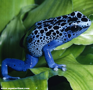 Pengertian, Jenis, Ciri, dan Struktur Tubuh Amfibi Beserta 6 Manfaatnya Menurut Para Ahli Terlengkap