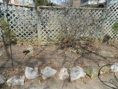 Riverdale Spring Cleanup After by Paul Jung Gardening Services--a Toronto Gardening Company