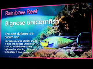 Example Of Ripley's Aquarium Signage