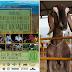 Codevasf apoia 1ª Feira da Agricultura Familiar e de Caprinos e Ovinos do Vale do Salitre, no norte da Bahia
