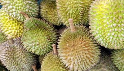 Cara Memilih Buah Durian Yang Bagus Berkualitas