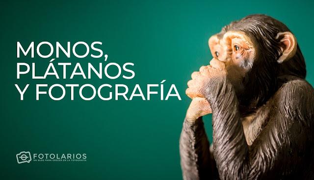 Monos, plátanos y Fotografía