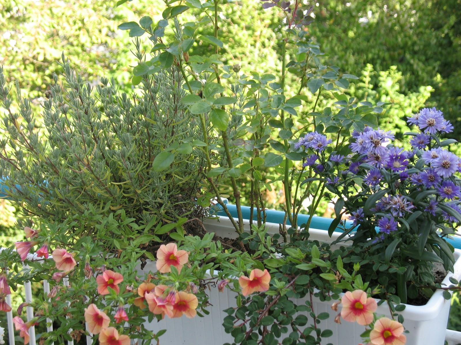 Pflegeleichte Balkonpflanzen: 10 Sorten Für Sonnige