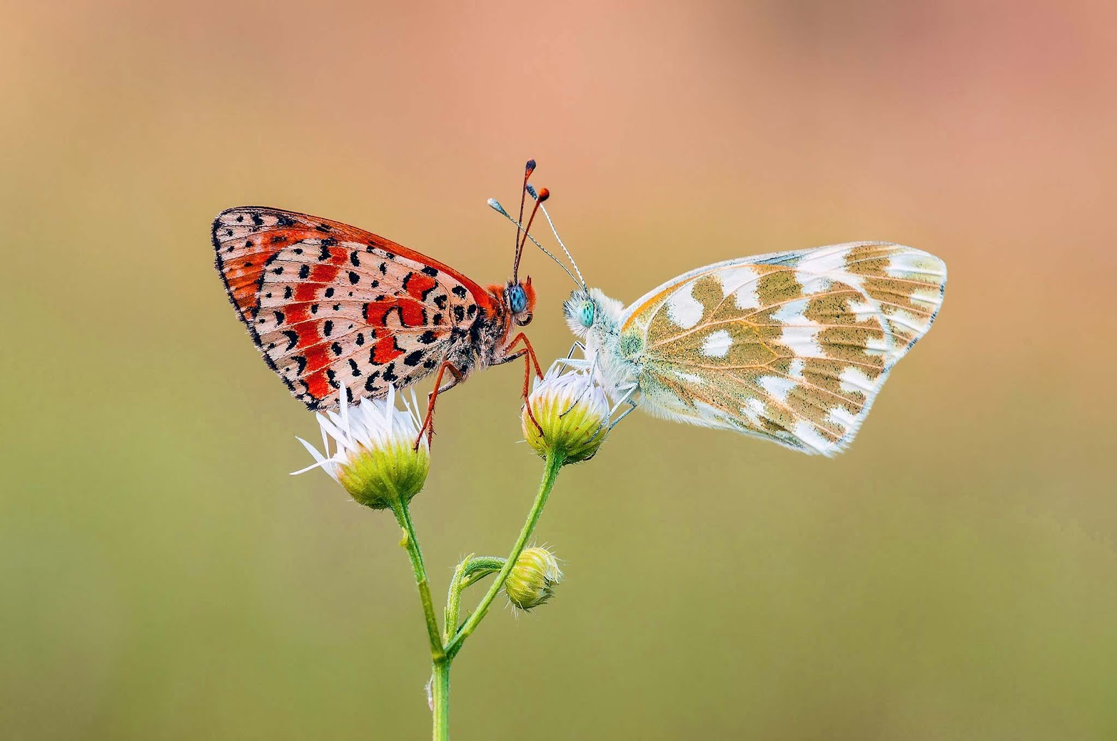 download free butterfly desktop wallpapers free large images