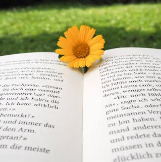 lesen-im-sommer-blume-buch