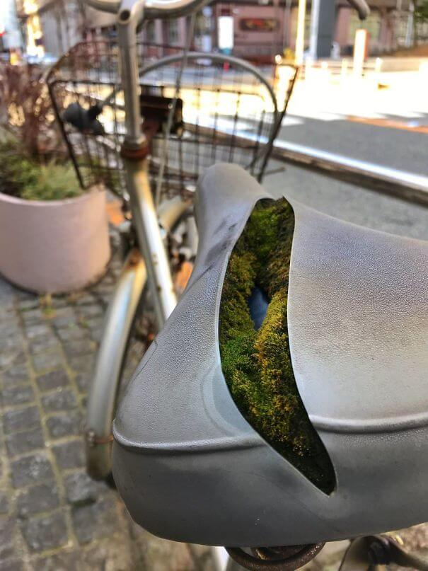 20 Pictures Prove That 'Accidental' Art Can Be Astonishing - This Colony Of Moss Growing Inside A Bike Seat
