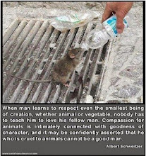Respect All Living Creatures