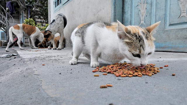 Terlalu Banyak Kucing Di Rumah, Bagaimana Hukum Membuang Kucing?
