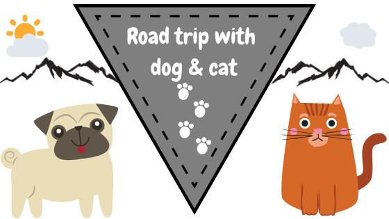 road trip dog cat