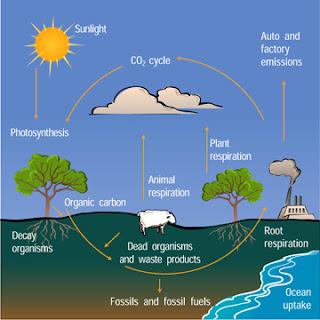 Belajar Kimia : Karbon