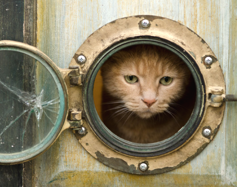 porthole door for cat