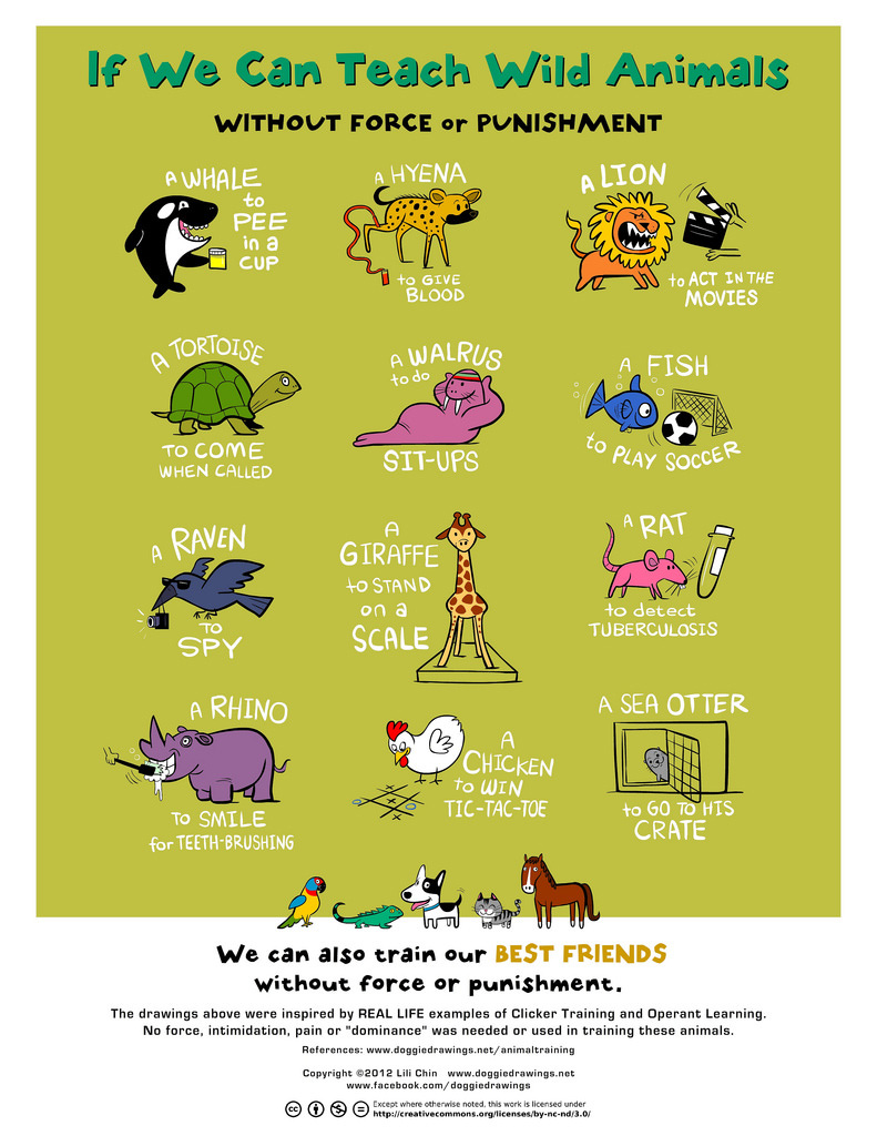 Lili Chin poster of wild animals who have been trained with rewards