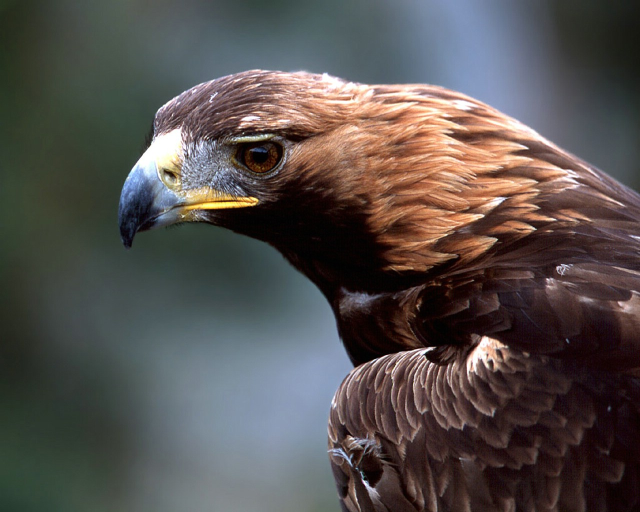 Beautiful Wallpapers Of Lonely Girl Hd Wallpapers Golden Eagles