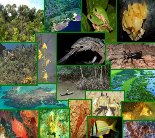 Diversidade de Espécies Preserva Ecossistema