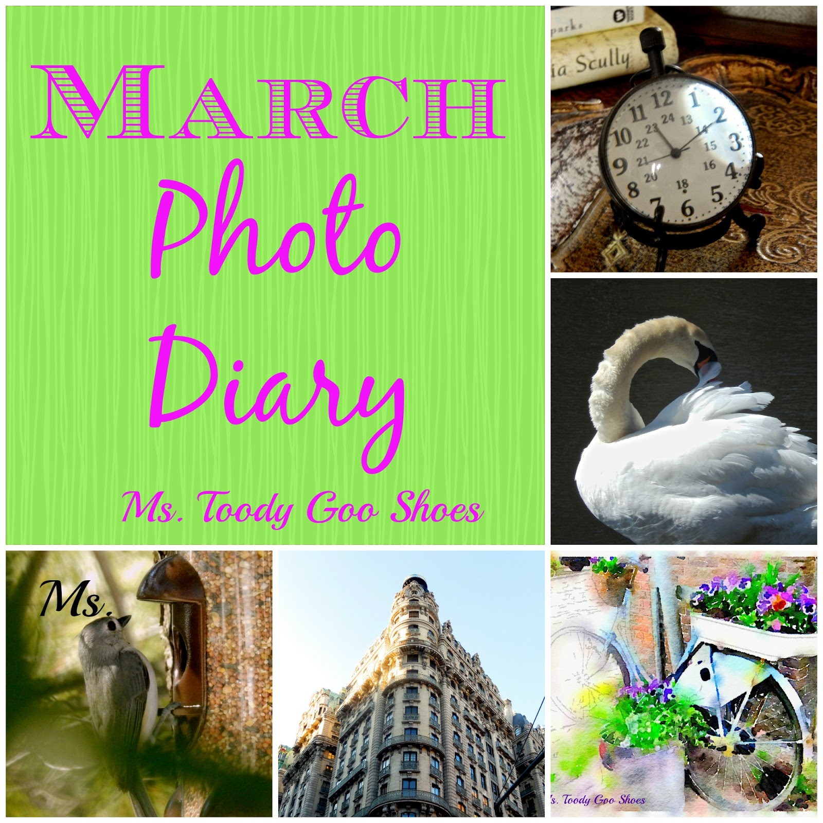 March Photo Diary  --- Ms. Toody Goo Shoes