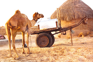Deshnoke Camel Safari Day Tours
