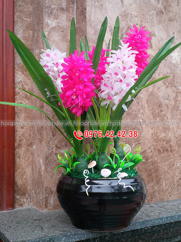 Hoa dạ lan hương - hoa tiên ông hồng trắng