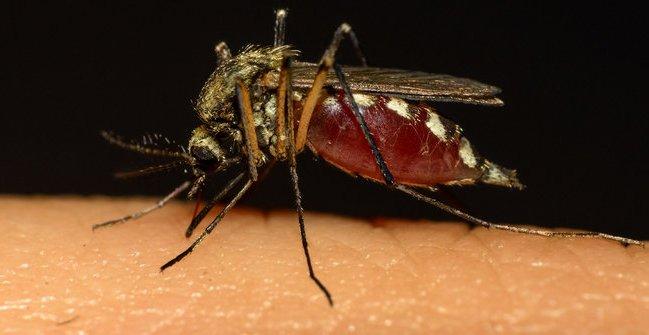 Benarkah Nyamuk Lebih Ganas di Malam Hari?