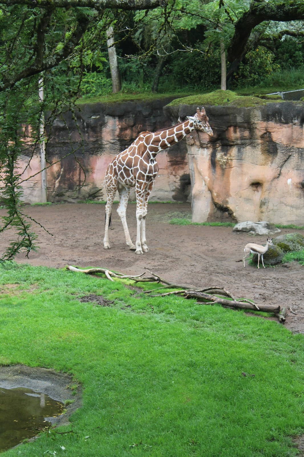 Oregon Zoo: The Cunningham Family: Oregon Zoo