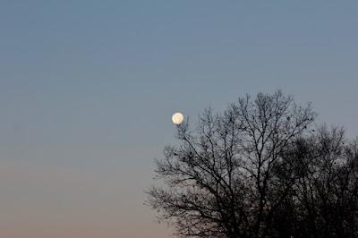 full moon setting, December 2016