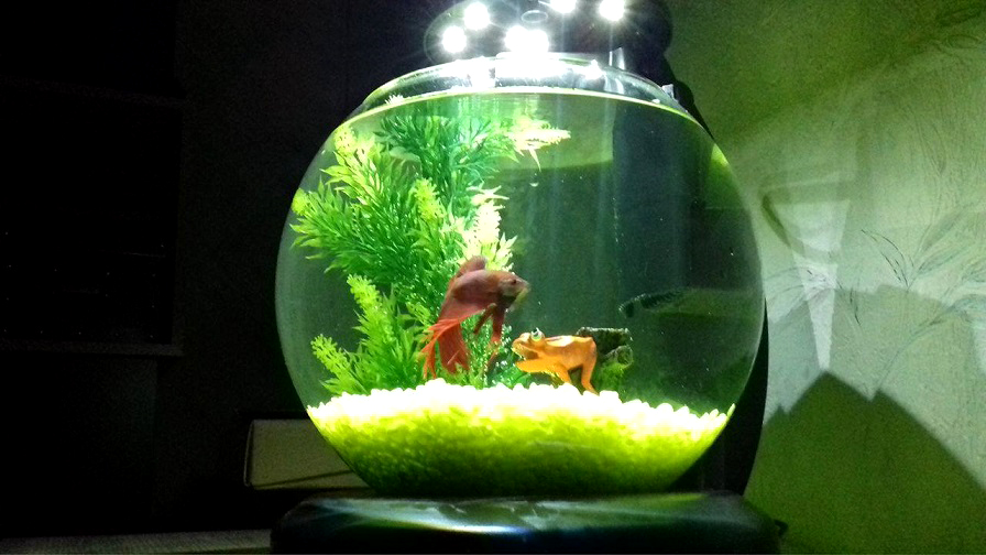 Blog de maman deuxfoismaman parent et enfants le for Petit aquarium boule