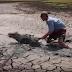 filhote de hipopótamo é resgatado por homens, atolado na lama ( vídeo) emocionante
