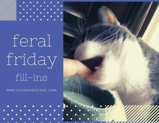 Feral Friday Featuring The Cat