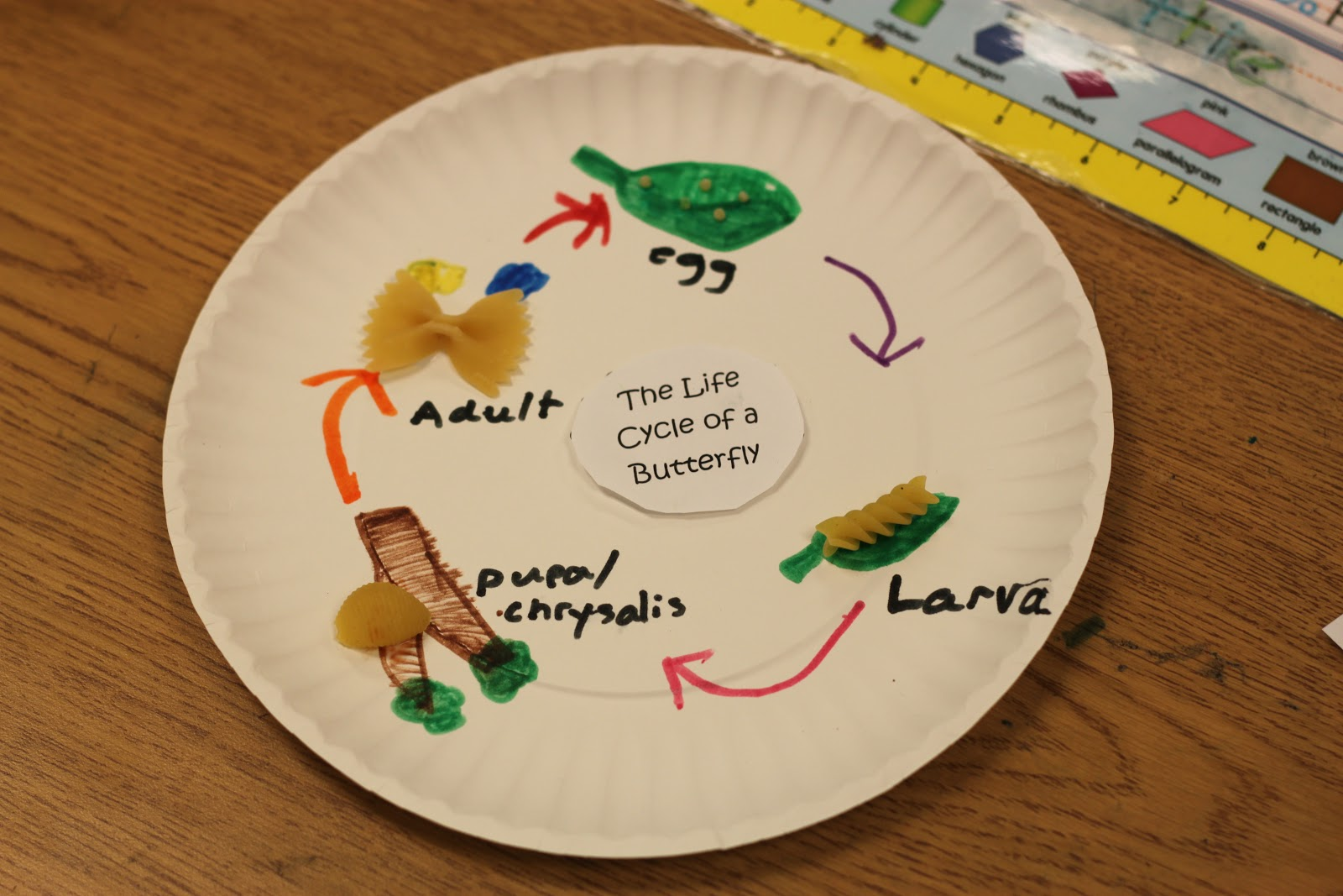 Simply Second Grade Pasta Butterfly Life Cycle